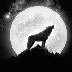 wolf-howling-at-the-full-moon-18032